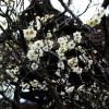 北鎌倉〜鎌倉散歩:東慶寺から鶴岡八幡宮