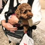 犬と一緒にお台場ヴィーナスフォート