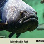 東京絵葉書:葛西臨海水族園