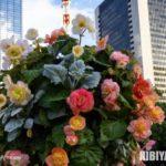 東京絵葉書:日比谷公園