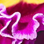 オリンパスToughを持って「夢の島熱帯植物館」