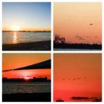 カメラとスケッチブックを持って葛西臨海公園