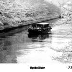 東京絵葉書:大横川の桜